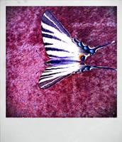 Butterfly2 by Torako-chan