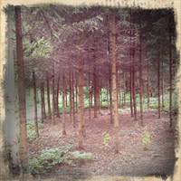 Retro forest by Torako-chan