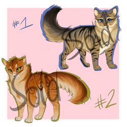 Sibirian Cat Adoptables #1 [ CLOSED] by Copperlight