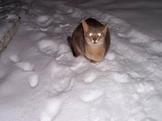 The Hypnotiser by Mystic-Cat-Goddess