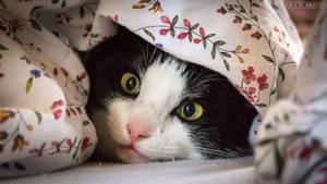 Undercover Cat by S-D-Brath