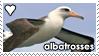 Albatrosses by WaywardSoothsayer