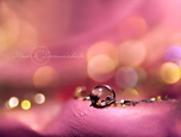 Soft II by LaZiaIla