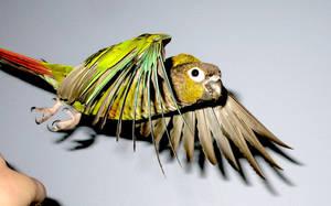 Bird taking off 4 by greencheek