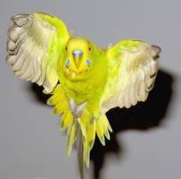 Pippin in flight by greencheek
