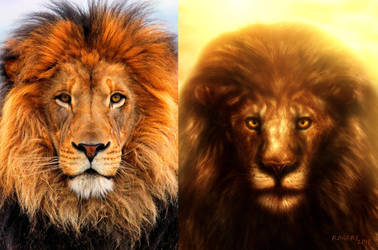 Lion of Judah Reference Photo by Red-Rogers