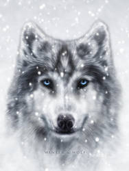 Winter Wolf by Red-Rogers