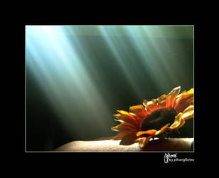 the sun and the flower by bayot
