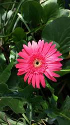 Flower by zolo187