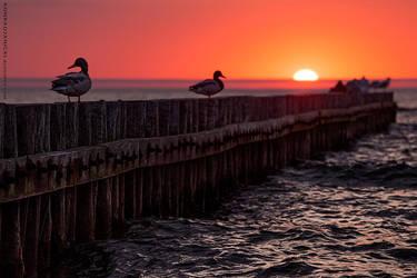 we love sunsets too by KonradJanicki