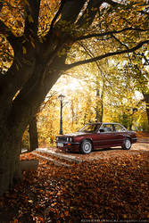 autumn light by KonradJanicki