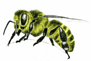 Worker Bee by ARTificialphanTOM