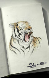Tiger drawing by SilverDreamCat