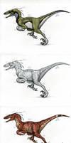 Utah Raptor Color Variations by pearlzu