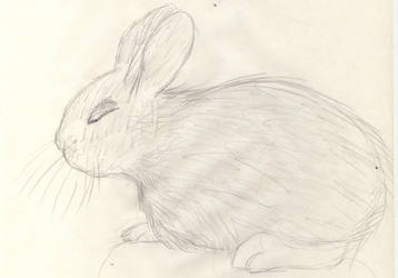 Baby Bunny by Ryani