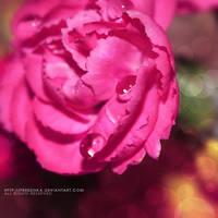 pink carnation... by freezinka