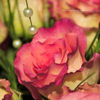 Rose by freezinka