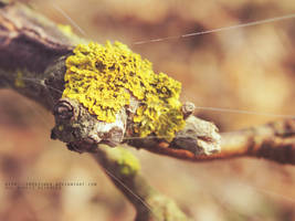 .lichen by freezinka