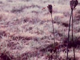 .spiderwork by freezinka