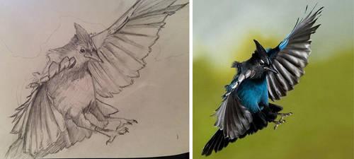 Bluejay in Flight by deviantbluebug