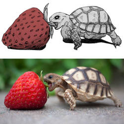 The Turtle and the Mother of All Strawberries by deviantbluebug