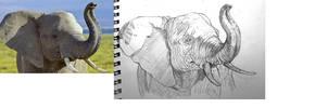 Elephant by deviantbluebug