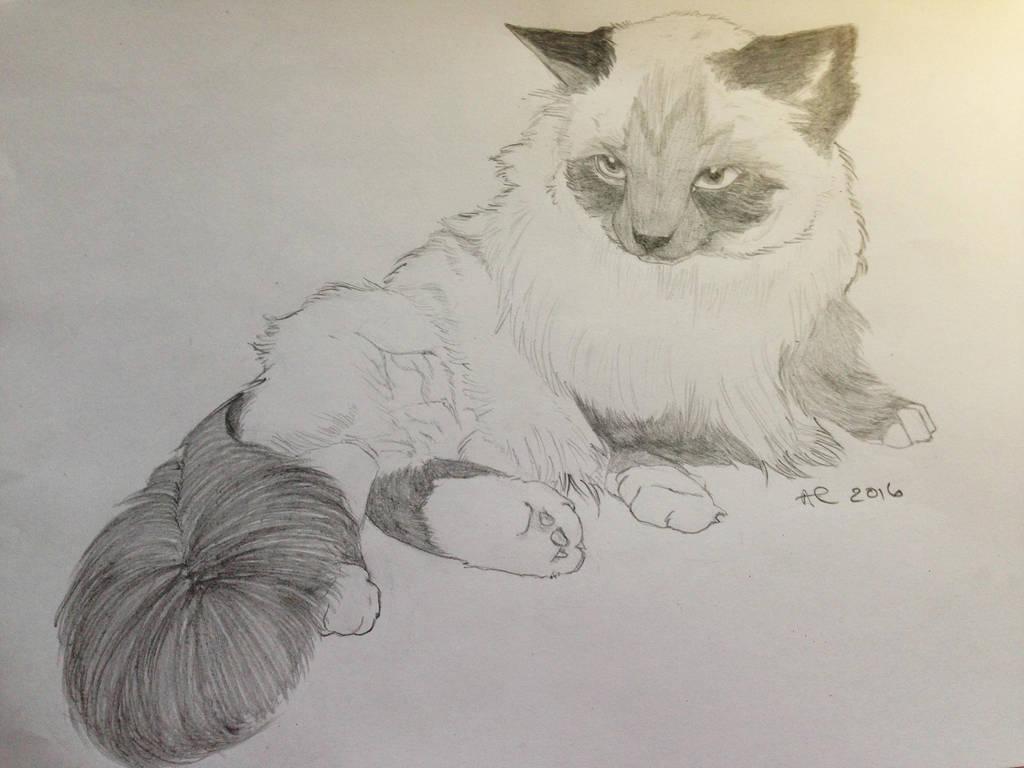 Callie by deviantbluebug