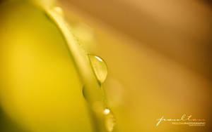 Yellow 1920x1200 by paultan