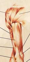 A09 - Anatomy - 2 by lirale