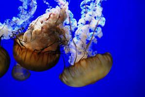 Jellyfish. by GreyLynx