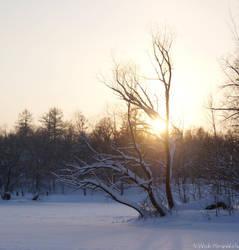 Winter in Gatchina 5 by hellnicki