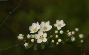 Flowers by hellnicki
