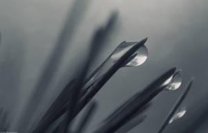 Rain by hellnicki