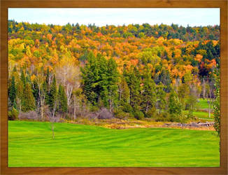 Autumn Leaves in the Gatineau Mountains, Quebec by pcellis