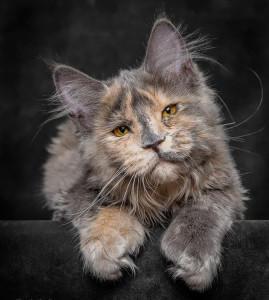 Gianea's Profile Picture