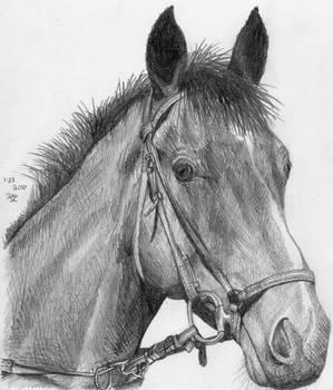 Horse Head Sketch by BrickTransformer555