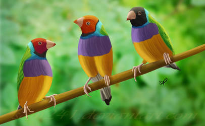 Lady Gouldian Finches by sam241