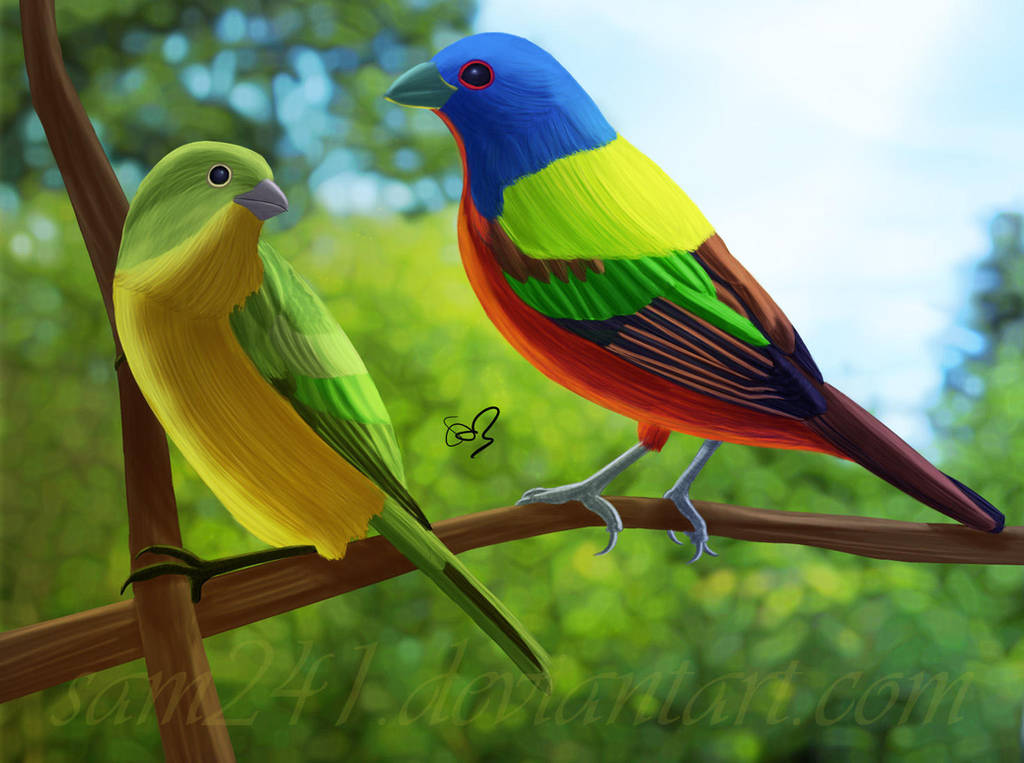Painted Buntings by sam241