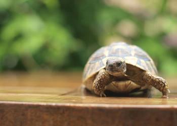 My new turtle friend by xSpelax
