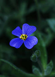 Flower by xSpelax