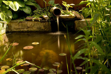 Home fishpond by xSpelax