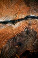 Chainsaw patterns by KajiyaEol