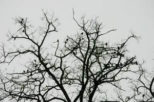 Les Oiseaux by KajiyaEol