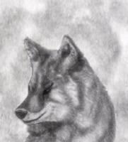 Mr. Coyote by Naywyn