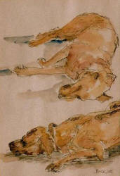 Sleeping dog by SophieNeville