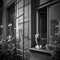 watchdog by panifajna