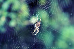 Autumn Spider 1 by YellowEleven