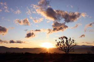 Lone Oak by YellowEleven