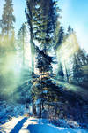 O Holy Tree by YellowEleven