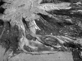 Tree Stump by Sidewalk by steeber